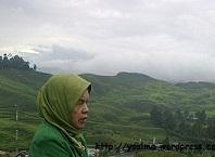 Ibunda dan Hijaunya Pemandangan Puncak Bogor