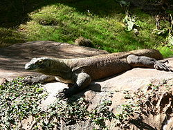 Komodo (gambar dari wiki)