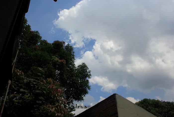 Informasi yang melahirkan tweet dan postingan Biru Langitku, Hijau ...