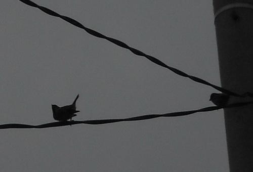 Kehidupan Menjelang Senja Sepasang Burung