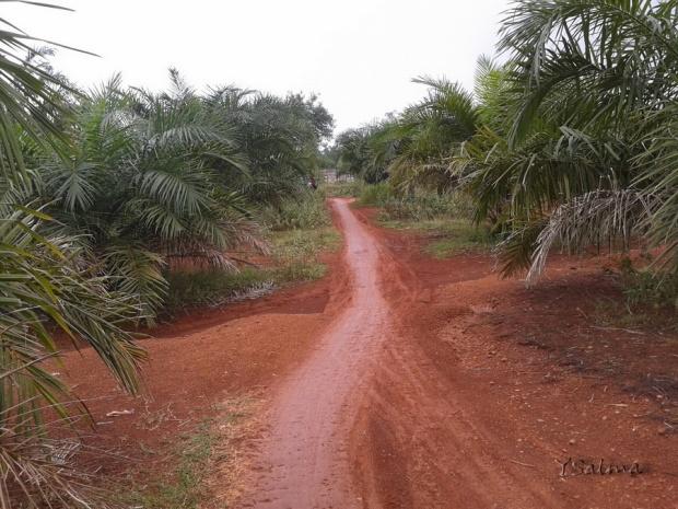 Jalan Tanah di Kebun Kelapa Sawit