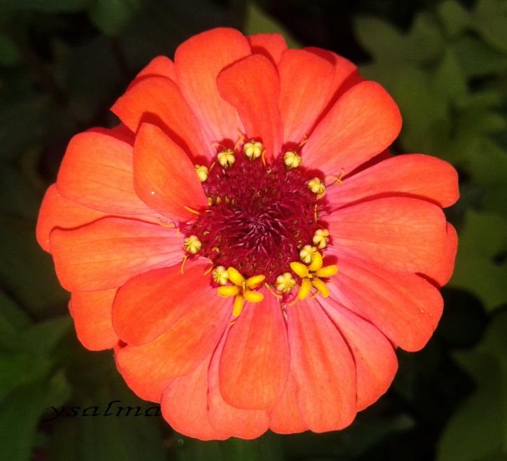 Sekuntum Bunga Oranye