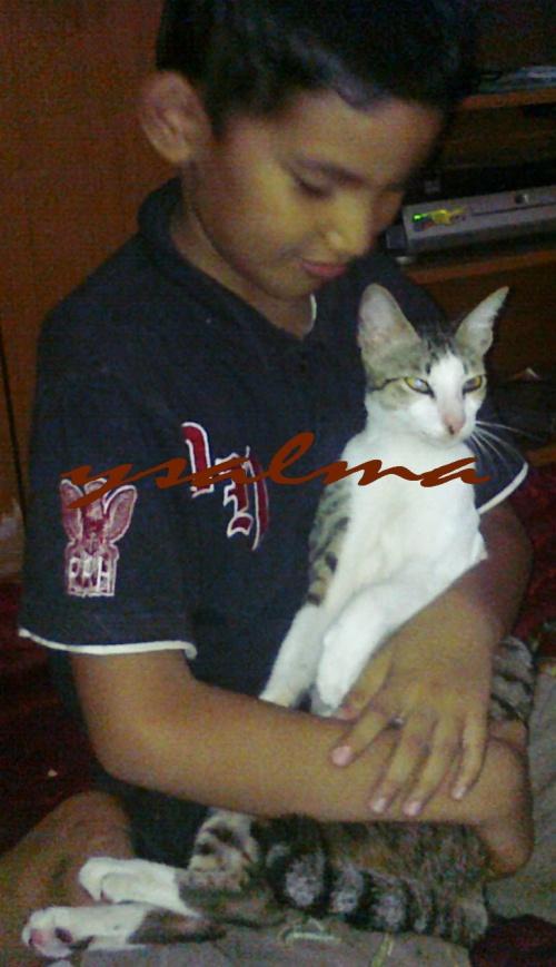 Rayuan (Anak dan kucing)