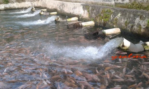 Menikmati Gemericik Air dan Ikan Berenang