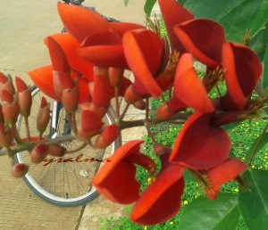 Foto malu-malu dibalik bunga