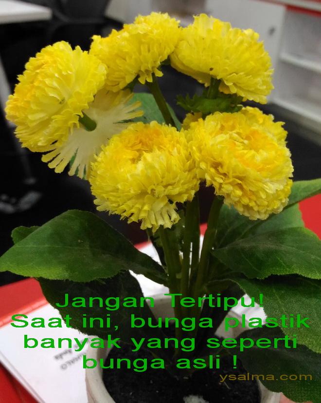 Jangan Tertipu Bunga Palsu