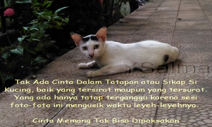 Surat Cinta Untuk Senior Lewat Tatapan Mata Kucing
