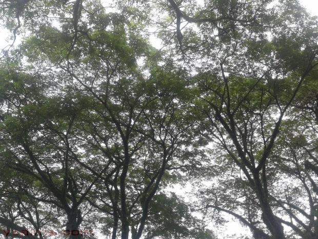 mencari-jalan-pintas-dan-oksigen-gratis-di-paru-paru-bumi