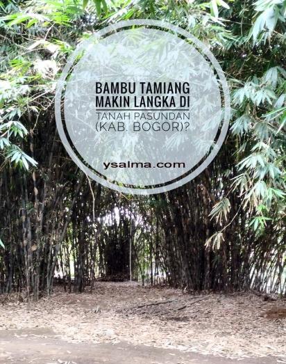 Bambu Tamiang Langka Bahan Alat Musik_YSalma