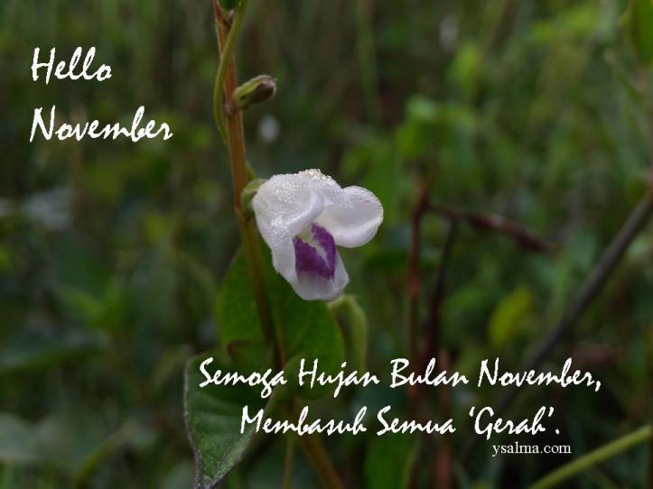 Hello November_YSalma
