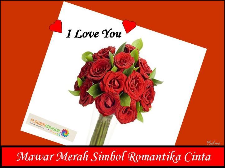 Mawar Merah Simbol Cinta Abadi