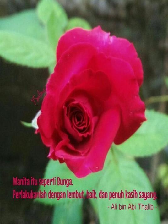 Wanita Ibarat Bunga Mawar yang merekah