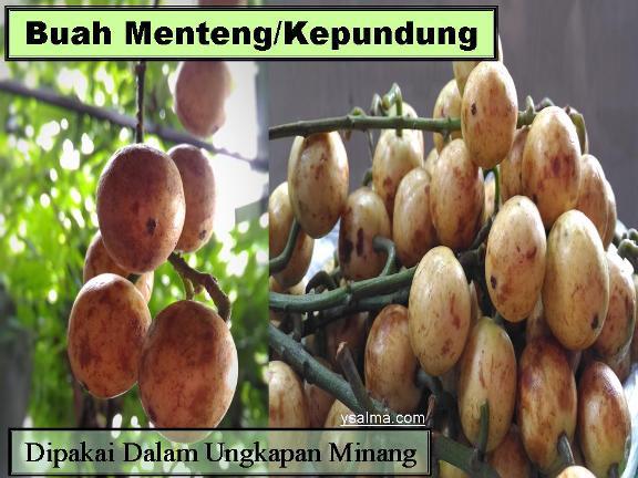 Buah kapunduang ddi daerah Minang digunakan sebagai ungkapan gregetan